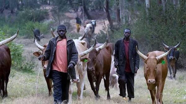 Fulani herdsmen drag Oyo govt. to court over anti-grazing law